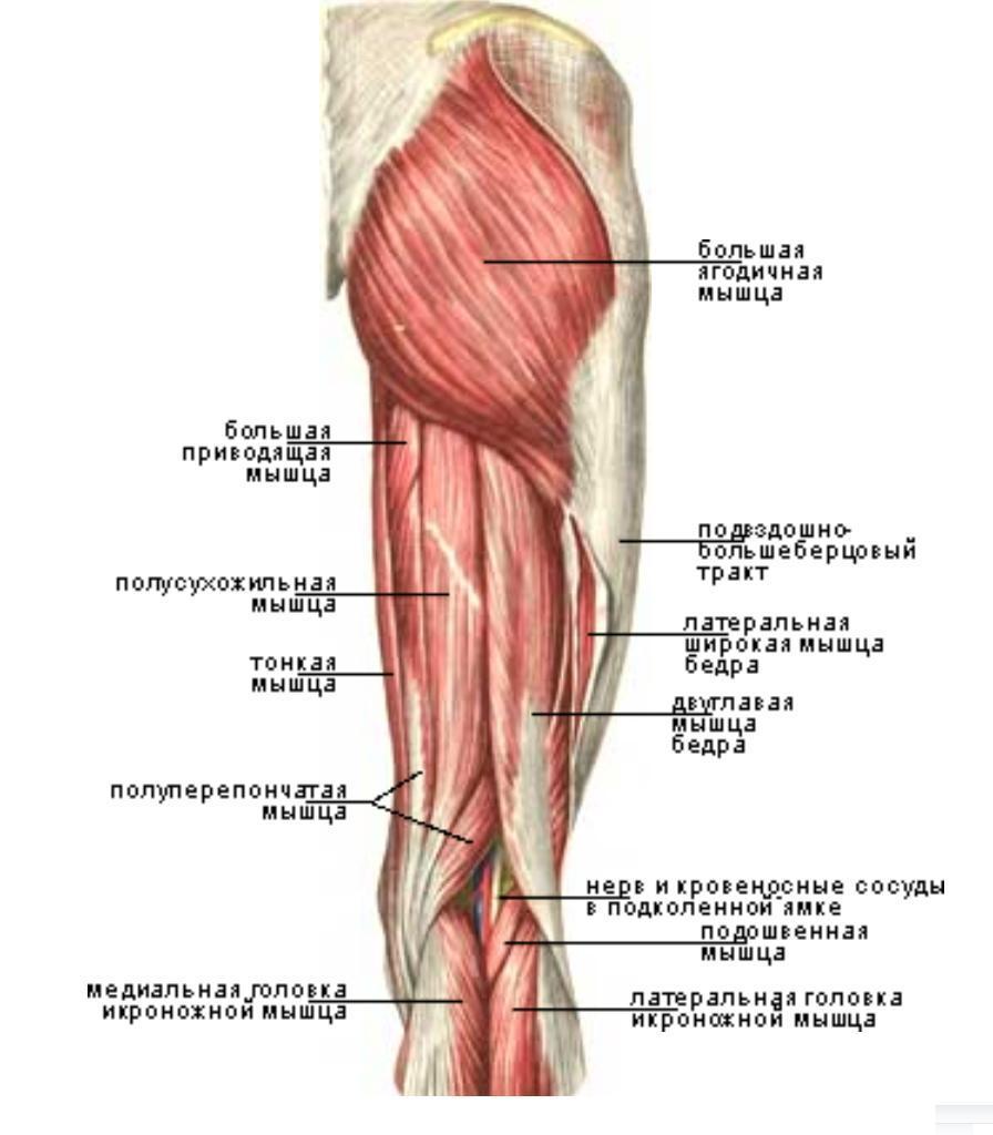 Упражнения для растяжения мышц тазобедренного сустава лучшие зарубежные клиники замена суставов